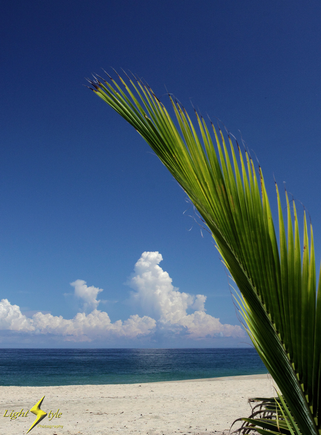 188_upload_Palm frond and clouds_1700x_6306